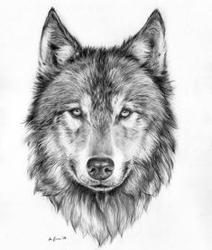 Watercolour Painting and Pen Wolf Original Art Print - Limited Editio. - Watercolour Painting and Pen Wolf Original Art Print – Limited Edition – wulf – - Wolf Face Drawing, Wolf Face Tattoo, Wolf Tattoos Men, Wolf Tattoo Sleeve, Animal Tattoos, Bear Drawing, Wolf Tattoo Design, Tattoo Designs, Wolf Design
