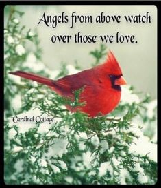 New Ideas For Cardinal Bird Quotes Love Bird Quotes, Me Quotes, Bird Sayings, Famous Quotes, Wisdom Quotes, Great Quotes, Inspirational Quotes, Motivational, Meaningful Quotes
