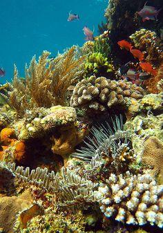 Anilao Reef by p@ragon, via Flickr