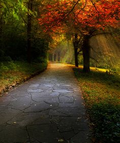 pathway - I love the rays of light in the background!