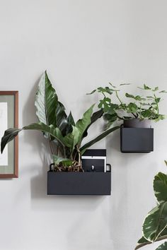 Just add green(ery). Peruse our roundup of versatile planters which can double as extra storage space. Shop planters at 2Modern. Wall, Plant Box, Wall Boxes, Wall Planters Indoor, Rectangle, Plant Wall, Powder Coating Metal, Living Wall, Ferm Living