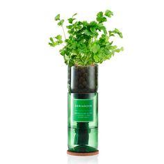 jar hydroponic planter - Google Search Grow Kit, Hydroponics, Planters, Herbs, Jar, Google Search, Hydroponic Gardening, Herb, Plant