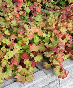 Yard, Exterior, Patio, Flowers, Plants, Garden Ideas, Plant, Landscaping Ideas, Courtyards