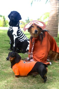 Halloween costumes. Dasher would look cute in a costume. :)