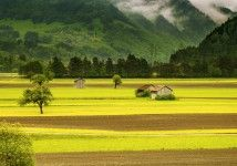 Green Meadows Beautiful Landscape Wallpaper