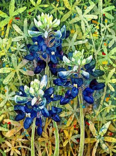 Bluebonnet watercolor painting by Hailey E. Herrera.