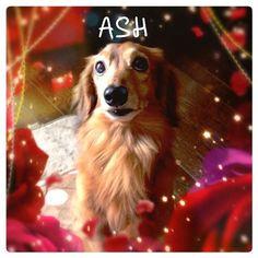Ash the dog #iphonegraphy  #cameran - @gogo405- #cameranapp