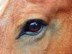 Painting brown eyes   FriesianFury Studio Blog