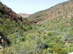 Veld near Steytlerville after good rain Home And Away, South Africa, Rain, Mountains, Nature, Travel, Rain Fall, Naturaleza, Viajes