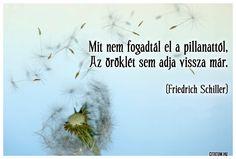 Friedrich Schiller idézete a múló pillanatokról. Friedrich Schiller, My Spirit, Messages, Education, Feelings, Movie Posters, Film Poster, Onderwijs