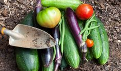 Companion planting that naturally keeps pests away and boosts yield