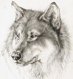 Wolf_by_xChelseax92.jpg (600×652)