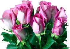 •bouquet roses gif