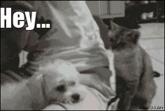 Who says cats ain't funny? | The 10 Funniest Cat GIFs Of The Week