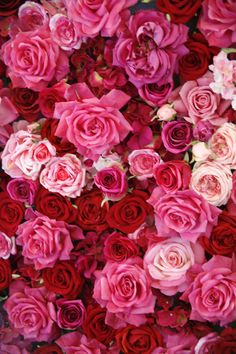 There's a type of rose for everyone in your life! But the red rose meaning, white rose meaning, yellow rose meaning, and black rose meaning are all very different. Here are all the rose color meanings you need to know. Coral Roses, Red And Pink Roses, Pink Flowers, Black Roses, Colorful Roses, Exotic Flowers, Black Rose Meaning, Beautiful Roses, Beautiful Flowers
