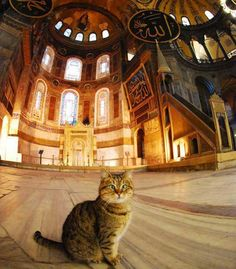 """the """"Hagia Sophia"""" (Istanbul) Cat : His name is Gli and he's very cross-eyed. President Obama petted him on a visit to Istanbul and Gli has been famous since. I Love Cats, Cute Cats, Funny Cats, Hagia Sophia Museum, Crazy Cat Lady, Crazy Cats, Hagia Sophia Istanbul, Animals And Pets, Cute Animals"""