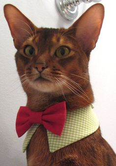 point collar in choice of color or print and interchangeable bow tie for cat.