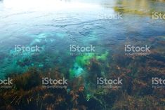 Looking into Pure Fresh Clear Spring Water Clear Spring, Spring Water, Photography Guide, Nature Photography, Great Backgrounds, Abstract Photos, National Parks, Royalty Free Stock Photos, Pure Products