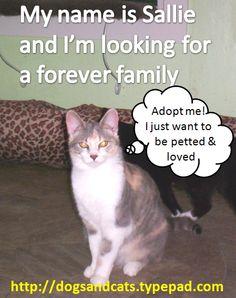 Celestial Kitties: Opt to Adopt Sallie!