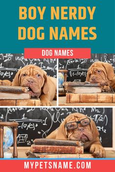 If you have an interest in space and planets, you could name your little boy after Galileo Galilei, the Italian astronomer who is often dubbed the 'father of modern physics'. Only if he has the intelligence to match though :p Find other boy nerdy dog names in our list here.  #boynerdydognames #nerdydognames #boydognames Male Pet Names, Boy Dog Names, Italian Dogs, Modern Physics, Four Legged, Little Boys, Best Dogs, Nerdy, Planets