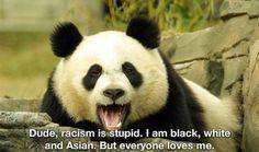 Panda against racism!