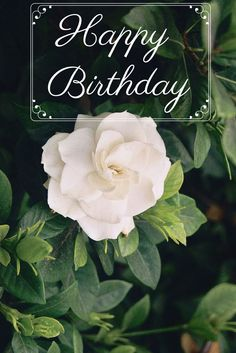Happy Birthday Gardenia - Pure, elegant and fragrant. Happy birthday to an amazing friend! Because Birthdays are More Fun Together....Consider sending a special and free birthday video by visiting Birthday Box bit.ly/BBoxPinterest