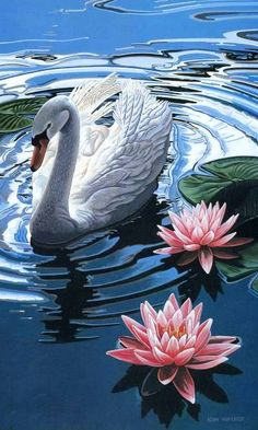 Swan and water lilies Swan Painting, Painting & Drawing, Fantasy Kunst, Fantasy Art, Image Nature Fleurs, Wildlife Art, Swans, Illustrations, Beautiful Birds