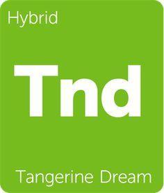 79f30089987997 Tangerine Dream Cannabis Strain Information