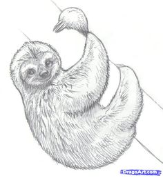 Realistic Drawing Of Sloth Coloring Page Color This