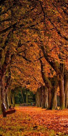 Autumn leaves park trees by vadaka1986 on Flickr #park