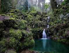 Mata do Buçaco, Buçaco forest.