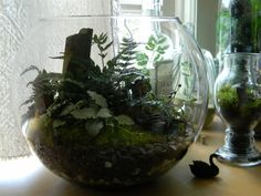 Beautiful Unusual Terrarium Containers With Plant White And Green With A Black Swan Out Ideas~ Popular Home Interior Decoration Glass Terrarium Containers, Large Terrarium, Cactus Terrarium, Hanging Terrarium, How To Make Terrariums, Unique Plants, Cool Plants, Tropical Terrariums, Terrarium Figurines