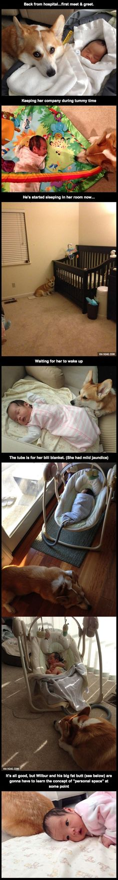 This girl was born three weeks ago. The corgi's treating her like his new BFF. ADORABLE