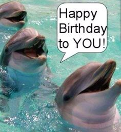 Happy Birthday Dolphins Grace for you♡♡☆☆ XOXO