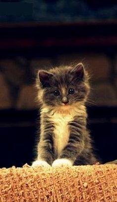 what a little cutiepie