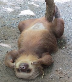 Just in case you forgot how awesome sloths are.