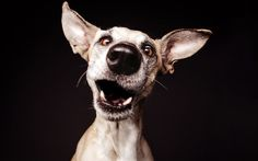 Elke Vogelsang's dog portraiture - Telegraph
