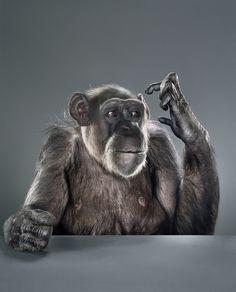 Monkey by Jill Greenberg