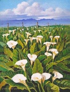 """""""Wild Arum Lilies in the Boland"""" Hannes van der Walt"""