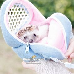 When it comes to make a journey for instance with a bike with your four-legged friend a dog bike carrier is very useful and important. Hedgehog Care, Pygmy Hedgehog, Baby Hedgehog, African Hedgehog, Dog Bike Carrier, Hamsters As Pets, Ferrets, Baby Animals, Cute Animals