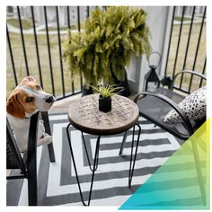 emilymorris__ maximized her balcony space with this seating area, and it's even dog approved! 🐶 A quick coat of Universal Metallic Spray Paint had these chairs looking like new. #DoItOutsideDIY #SmallSpaceFacelift . #RustoleumCAN #DIY #DIYer #DIYProject #Balcony #BalconyDecor #BalconyDesign #BalconyGarden #OutdoorLiving Refinished Patio Furniture, Metallic Spray Paint, Glam And Glitter, Balcony Design, Best Budget, Home Projects, Furniture Ideas, Small Spaces, Outdoor Living