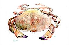 Crab illustration by Michael Frith