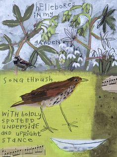Song Thrush and Hellebores by Elaine Pamphilon | Giclée Print | 24 x 18 cm | Edition of 250 #elainepamphilon #tannerandlawson #stives