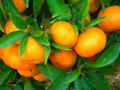 """Die """"Naranjas"""""""