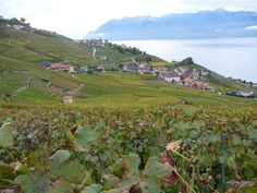 Switzerland has 11 UNESCO sites – three outstanding natural phenomena and eight cultural heritage locations. For the first time this June, Switzerland wil Stuff To Do, Things To Do, Lake Geneva, Natural Phenomena, One In A Million, World Heritage Sites, Switzerland, June, Country