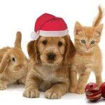 Animal Christmas!