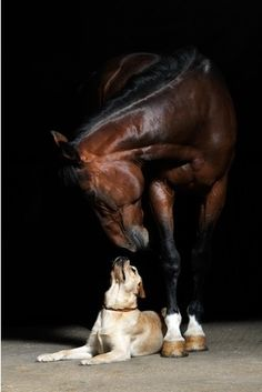 a fine portrait of  horse and his dog Learn about #HorseHealth #HorseColic http://www.loveyour.horse