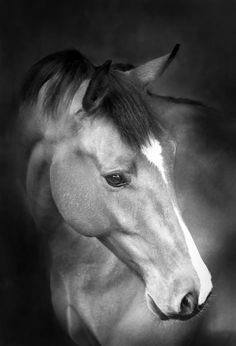 Black Photography Gallery | Gallery | Wildair Fine Art Equine Photography