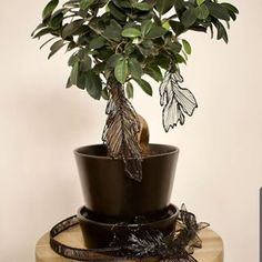 PRECISE General Trading LLC (@preciseuae) • Instagram photos and videos 3d Pen, Planter Pots, Eco Friendly, Leaves, Photo And Video, Videos, Green, Nature, Photos