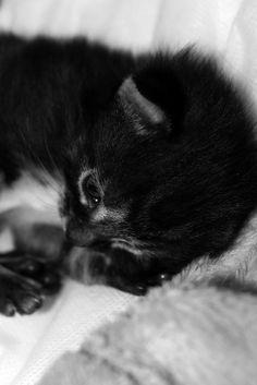 jinx by mardyeas, via Flickr